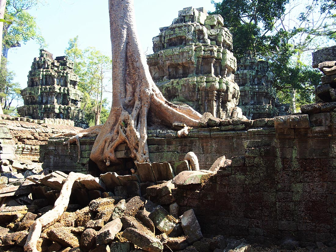 angkor ta prohm unesco