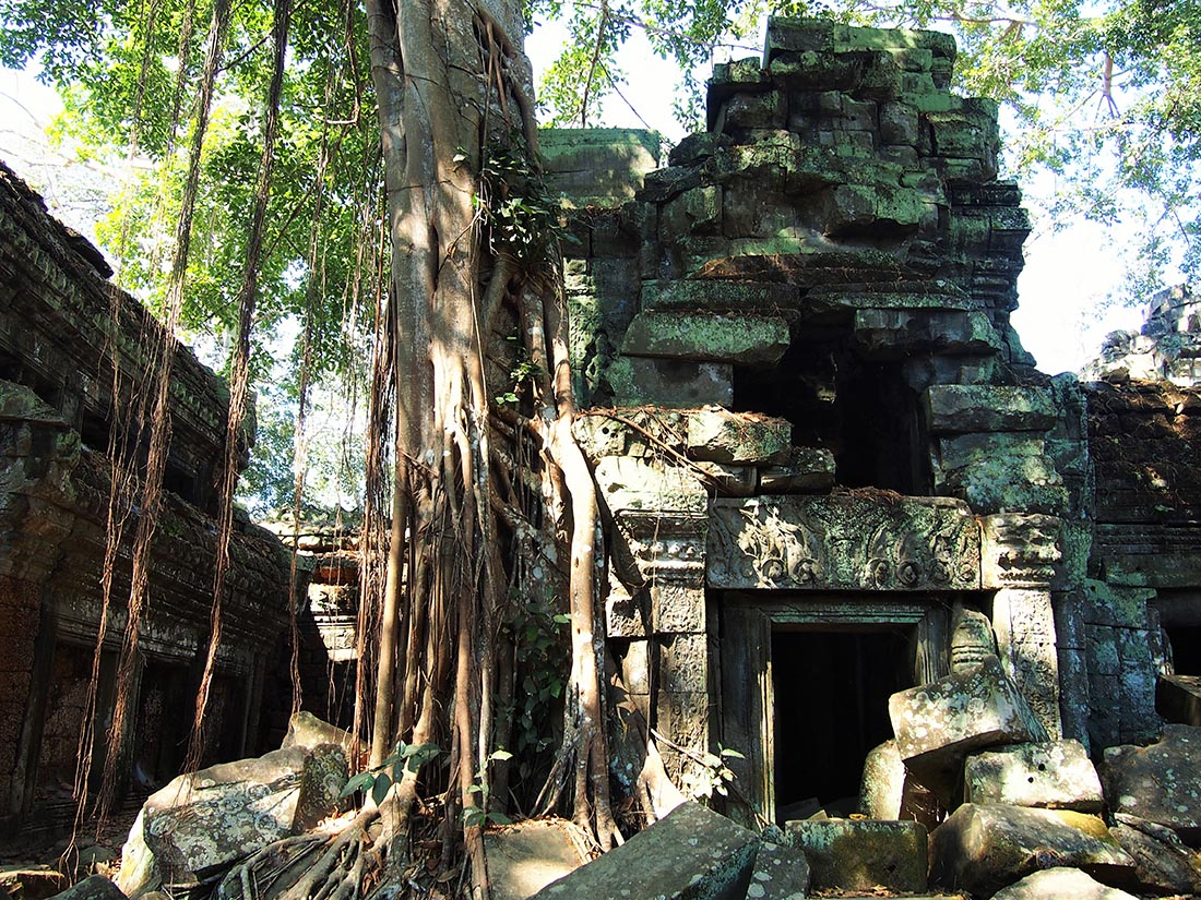 angkor temple ta prohm