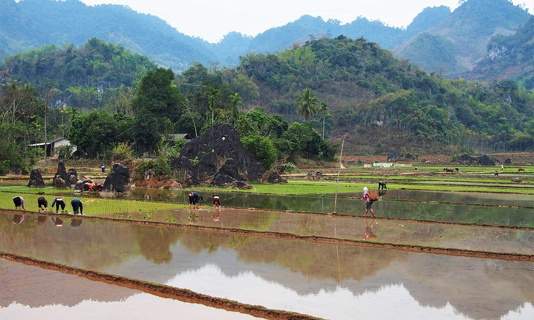 vietnam mai chau