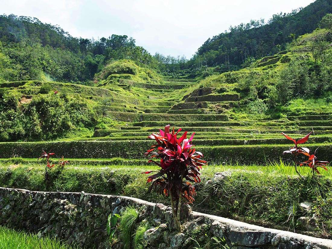 philippines rizieres banaue